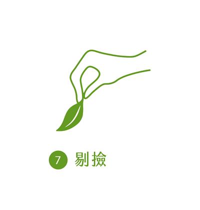 晁鎮茶苑古樹茶雨林製作流程剔檢