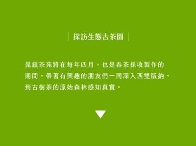 晁鎮茶苑探訪生態古樹園