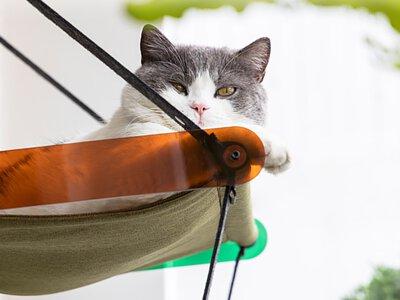 pidan貓咪窗邊吊床