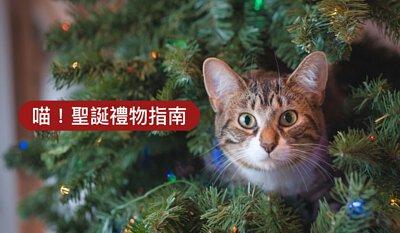 mao-christmas-gift