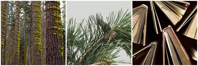 木質及苔蘚調香氛