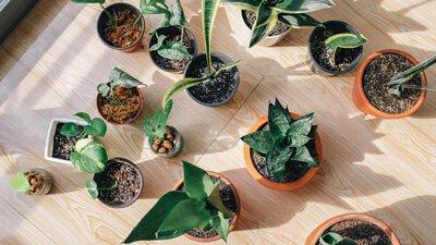 覺得整體空間有些過於單調,那就不妨加入一些綠色植物來點綴吧!