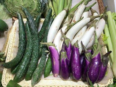 Organic eggplant from Hong Kong 香港有機紫/白茄子