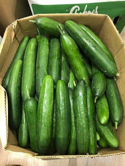 Lebanese Cucumber from Australia 澳洲青瓜仔