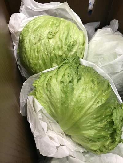 Iceberg Lettuce from Australia 澳洲西生菜