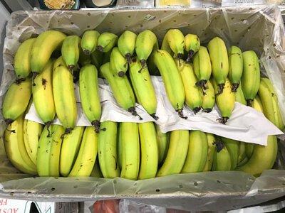 Organic Banana from Australia 澳洲有機香蕉