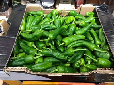 Padron Pepper from Spain 西班牙青尖椒