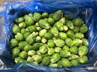 Brussels Sprout from Holland 荷蘭椰菜仔