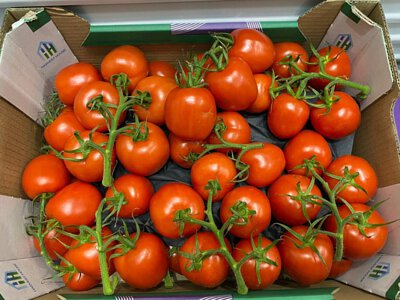 Round Tomato on Vine from Holland 荷蘭有枝番茄