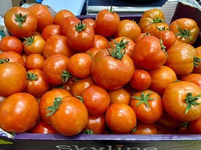 Organic Tomato from Hong Kong 香港有機番茄