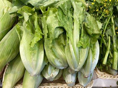 Organic Chinese Lettuce from Hong Kong 香港有機唐生菜
