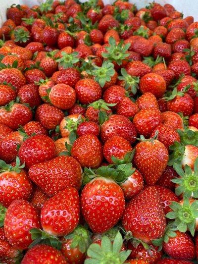 Organic Strawberry from HK 香港有機士多啤梨 草莓