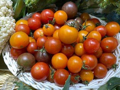 Organic Cherry Tomatoes from Hong Kong 香港有機車厘茄