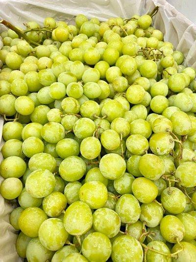 White Grapes Seedless from Australia, Autumn Crisp, 澳洲無核青提子