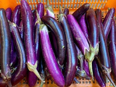 Oganic Eggplant from HK, 香港有機茄子