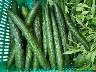 Organic Cucumber from HK 香港有機青瓜