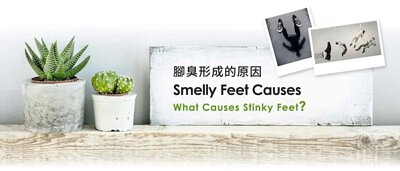 除腳臭除臭襪,腳臭形成的原因 Smelly Feet Causes What Causes Stinky Feet?