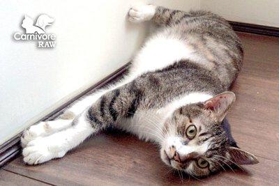 寵物營養:貓知覺過敏症 貓中邪 幻覺 癲癇