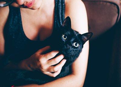 寵物營養:腎衰貓 限制蛋白質攝取 低磷 是否正確