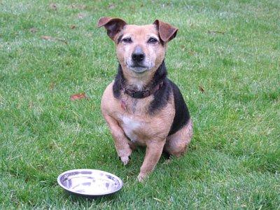 寵物營養:最好的寵物食品 自製食物的危險性