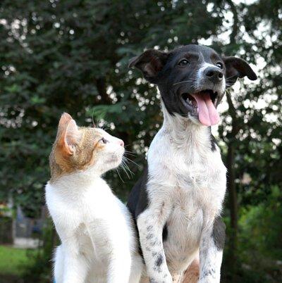 寵物營養:貓狗寵物要吃什麼比較好