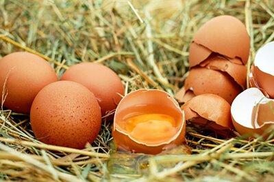 寵物營養:狗吃生雞蛋 狗吃生蛋