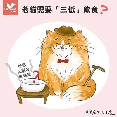 老貓飲食,老貓低蛋白,低脂,老貓照顧
