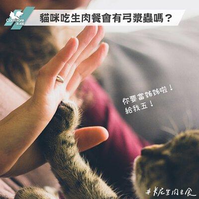 貓生食,弓漿蟲,HPP