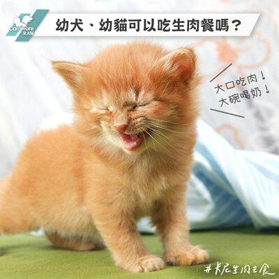 幼貓吃生肉,幼犬吃生肉