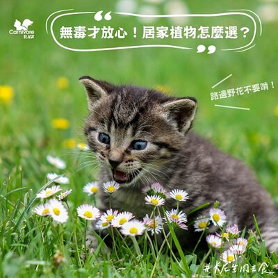 寵物無毒植物,貓咪有毒植物