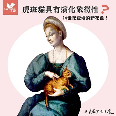 虎斑貓,貓演化,貓花色