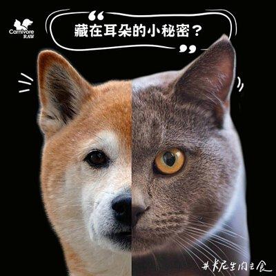 貓耳脊毛,亨利口袋,狗聽力