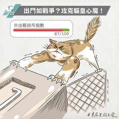 貓外出籠信訓練