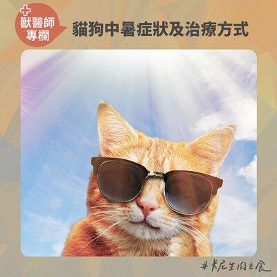 貓中暑,狗中暑,寵物熱衰竭