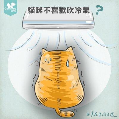 貓行為,貓吹冷氣,貓討厭冷氣,貓怕冷,貓怕熱