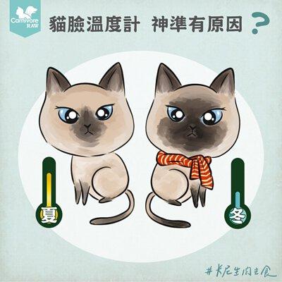 暹羅貓,貓臉溫度計,重點色貓,暹羅貓變黑