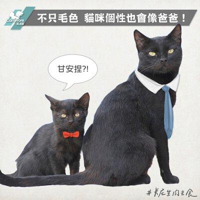 公關貓,貓怕生,貓個性,貓遺傳,貓爸爸,親人貓