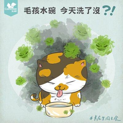 生物膜,水碗,貓碗,狗碗,寵物碗,塑膠碗,細菌,食安