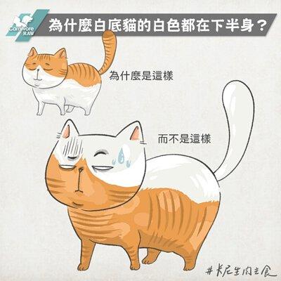 白底貓,貓遺傳,貓花色,三花貓,橘貓,白貓,黑貓,虎斑貓,米克斯貓,乳牛貓,賓士貓