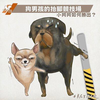 狗尿尿,狗行為,狗散步,狗狗抬腳,吉娃娃,巴哥犬,氣味記號,狗狗亂尿尿