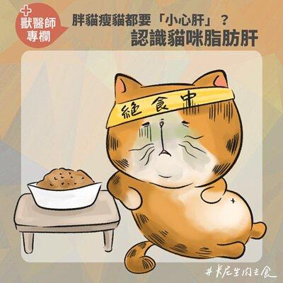 胖貓瘦貓都要「小心肝」?認識貓咪脂肪肝