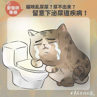 貓咪亂尿尿?尿不出來?留意下泌尿道疾病!