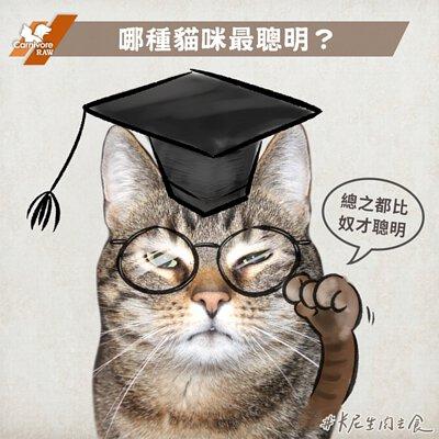 戴著學位帽和眼鏡的聰明貓咪