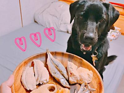 狗狗等吃卡尼零食