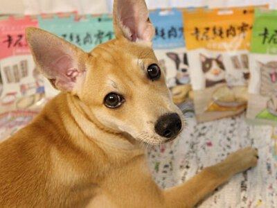 狗狗和卡尼零食