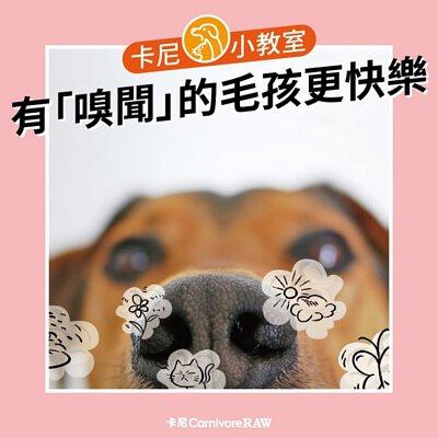 充足的嗅聞能夠讓狗狗更快樂