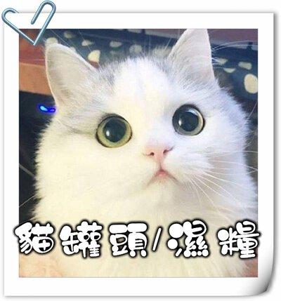貓,貓咪,寵物用品,貓砂,貓糧,貓玩具,貓清潔,貓罐頭,貓零食,貓濕糧,乾糧,天然貓糧,脫水貓糧,貓小食,貓玩具,feline,canine,cat,pet,online pet,pet shop,cat food,cat canned food