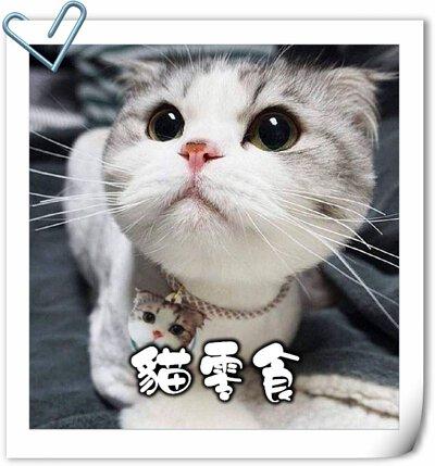 貓,貓咪,寵物用品,貓砂,貓糧,貓玩具,貓清潔,貓罐頭,貓零食,貓濕糧,乾糧,天然貓糧,脫水貓糧,貓小食,貓玩具,feline,canine,cat,pet,online pet,pet shop,cat food,cat treats