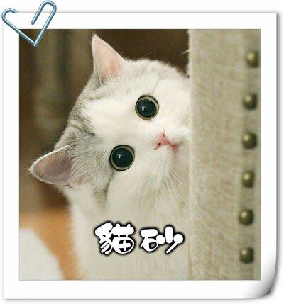 貓,貓咪,寵物用品,貓砂,貓糧,貓罐頭,貓零食,貓濕糧,乾糧,天然貓糧,脫水貓糧,貓小食,貓玩具,feline,canine,cat,pet,online pet,pet shop,cat food,cat litter,豆腐砂,粟米砂,貓砂消臭