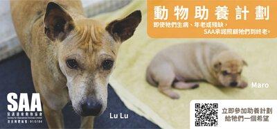 SAA,動物助養計劃,starpethk,SAA保護遺棄動物協會,動物協會,助養動物,領養,支持領養